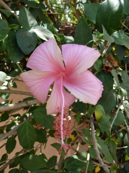L'été arrive... dans A l'appart hibiscus