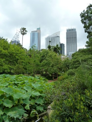 Sydney-jardin