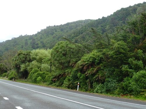 bord-de-route paysages Nouvelle Zélande dans Vacances en Nouvelle Zélande déc.2011-janv.2012