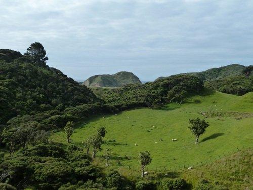 paysage-moutons