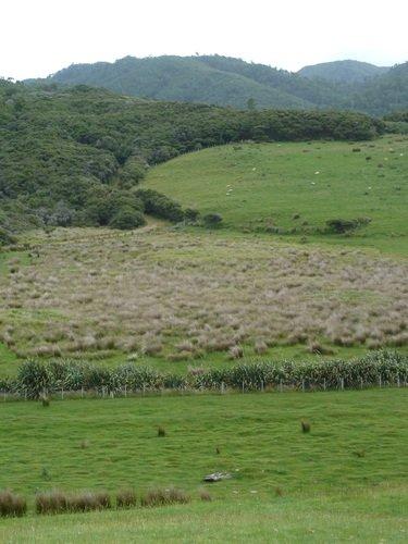 paysage-moutons2