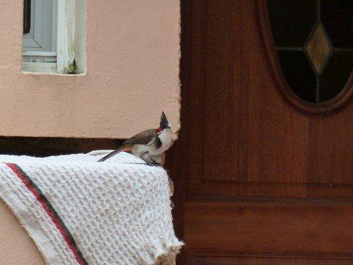 Oiseau-punk