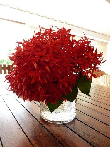 Un peu de douceur... dans Vie quotidienne Vase-fleurs